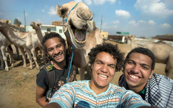 Funny Camel Smiling For Camera