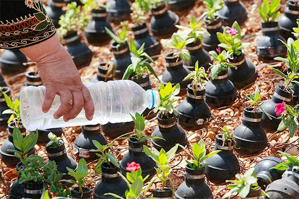 Palestinian gardener uses hundreds of spent tear gas canisters as plant pots
