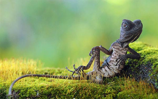 Chilled Forest Lizard