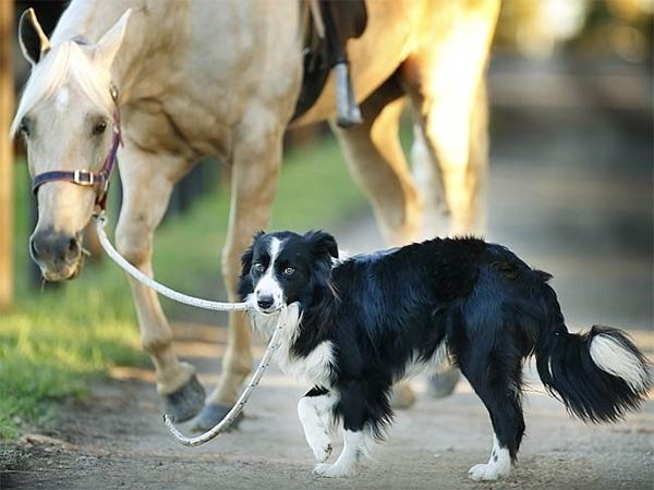 Dog Training & Riding Horse