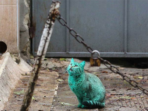 Stray Cat Accidentally Turned Itself Green
