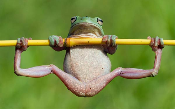 Tree Frog Enjoying a Gymnastic Work Out