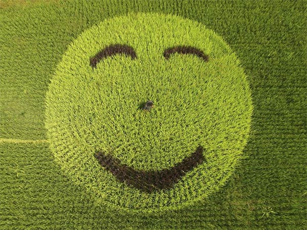 Smiley Face Made of Rice Plants