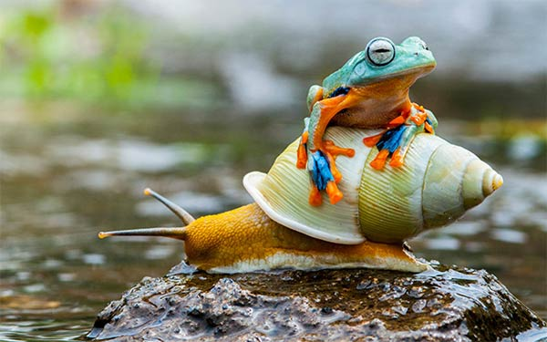 Frog Riding On The Back Of A Snail