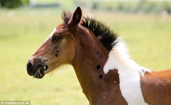 Foal Born with Another Horse Marking