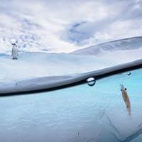 Antarctic Drama