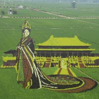 Giant 3D Image of TV Character Mi Yue Created with Rice Plants