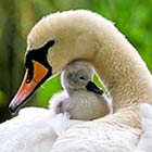 Inspiring Animals Mother's Love Photos - Part 2