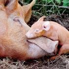 Inspiring Animals Mother's Love Photos