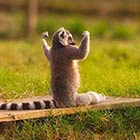 Funny & Cute Animals Doing Yoga