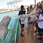 Beluga Whale Sprays Water Onto Visitors