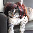 Creative Wigs & Costumes For Cats & Dogs