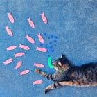 Conceptual Photography of Cats