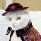 Cute Fashion Cats
