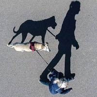 Long Shadows Of Woman & Her Dog On Street