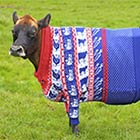 Fashion-Conscious Cow Modelling Her Custom-Fitted Christmas Jumper