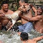 Bizarre Baby Goat Drowning Ritual