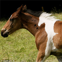 Horse Born With Marking That Looks Like ANOTHER Horse