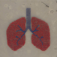 Over 1,500 People Forming An Image Depicting Human Lung