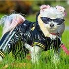 Princess Pixie Pants: A Fashion Conscious Rescue Dog