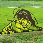 Amazing Japanese Rice Paddy Art