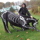 White Bones Painted on Black Horse For Halloween