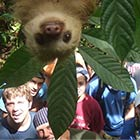 Funny Sloth Photobomb
