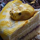 The Terrifyingly Realistic Snake Cake