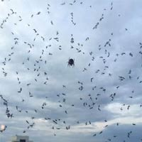 Dozens of Mosquitoes Trapped In Spider-Web