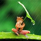 Tiny Frog Shelters Under Leaf Umbrella