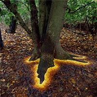 Artist Carefully Arranged Leaves Making The Tree Look Glow