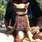 Ultra Cool Kitty