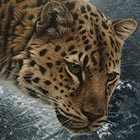 Realistic Wildlife Paintings