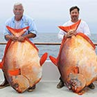 World's Largest Opah Fish