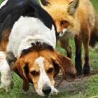 World's Worst Hunting Dog